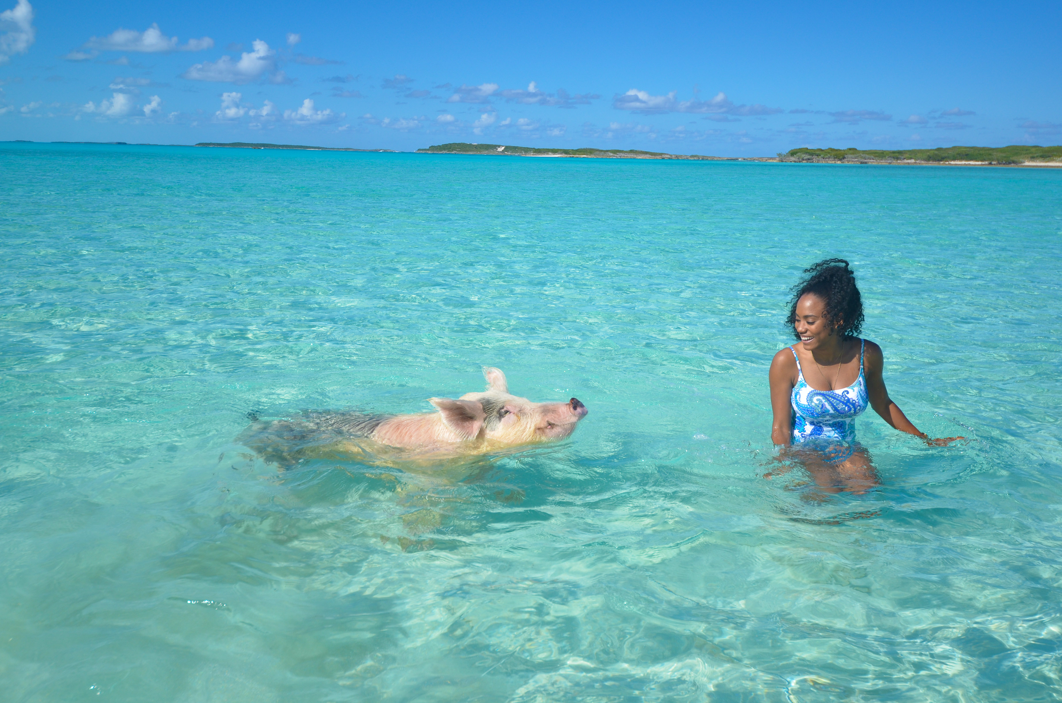 10 Major Tips For Visiting The Swimming Pigs - SHESOMAJOR